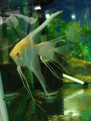 京葉熱帯魚5