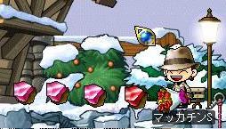 Maple0193a.jpg
