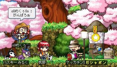 Maple0300a.jpg
