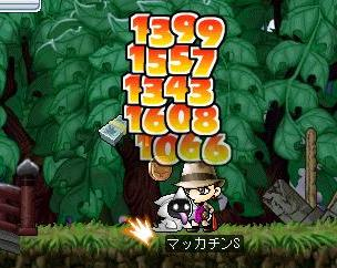 Maple1116a.jpg