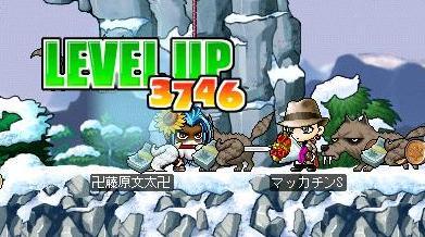 Maple1287a.jpg