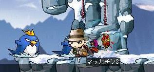 Maple1336a.jpg