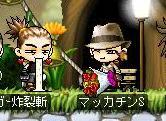 Maple1400a.jpg