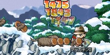 Maple1449a.jpg