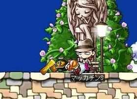 Maple1741a.jpg