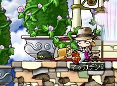 Maple2024a.jpg