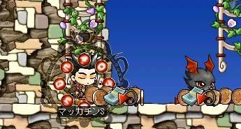 Maple2443a.jpg