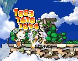 Maple2786a.jpg