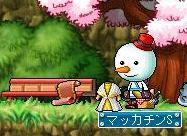 Maple3286a.jpg