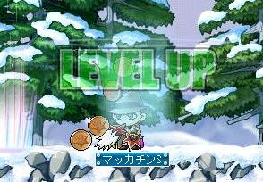 Maple3677a.jpg