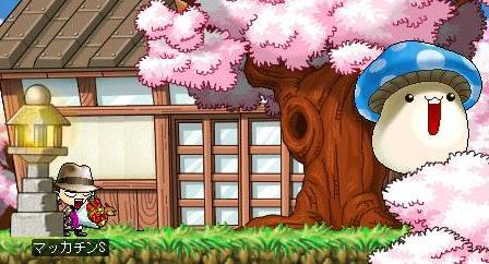 Maple4164a.jpg
