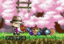 Maple4169a.jpg