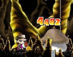 Maple4239a.jpg