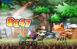Maple4378a.jpg
