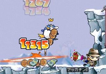 Maple4387a.jpg