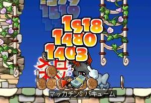 Maple4598a.jpg