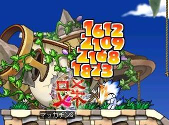 Maple4817a.jpg