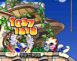 Maple4826a.jpg