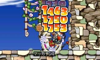 Maple4849a.jpg
