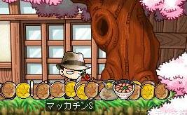Maple4861a.jpg