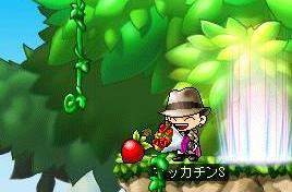 Maple4890a.jpg