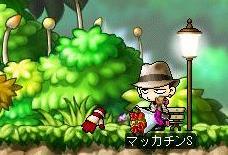 Maple4897a.jpg