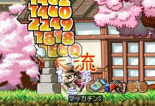 Maple4908a.jpg
