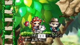Maple5018a.jpg