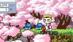 Maple5336a.jpg