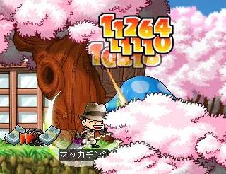 Maple5389a.jpg