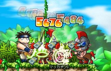 Maple5437a.jpg