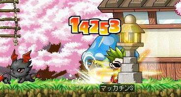 Maple5575a.jpg