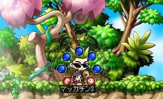 Maple5641a.jpg