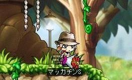 Maple5732a.jpg