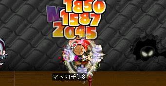 Maple5769a.jpg