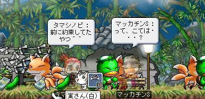 Maple5984a.jpg