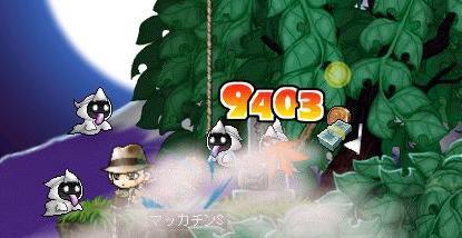 Maple6029a.jpg