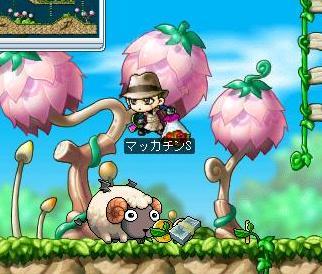 Maple6032a.jpg
