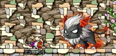 Maple6179a.jpg