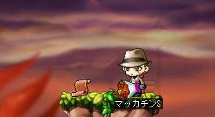 Maple6286a.jpg