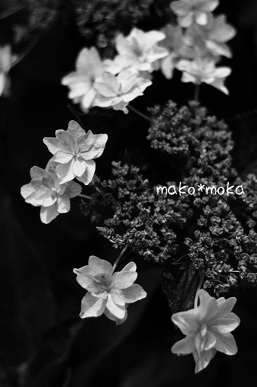 mIMG_3937のコピー