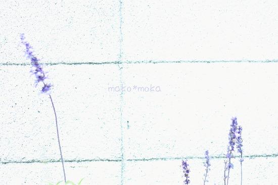 mIMG_3932のコピー