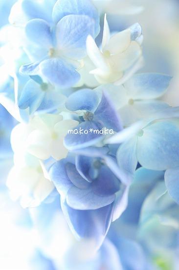 mIMG_3953のコピー