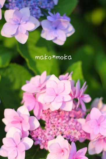 mIMG_3986のコピー