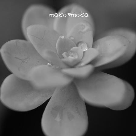mIMG_3962のコピー