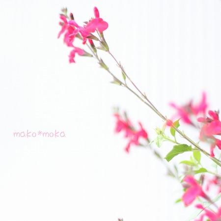 mmIMG_3943のコピー
