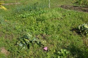 11月の菜園