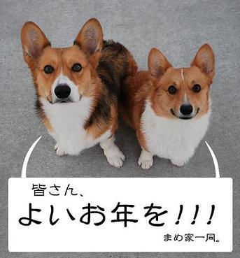 ご挨拶(まめ太郎&小豆)