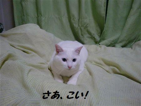 002_R_20090504003519.jpg