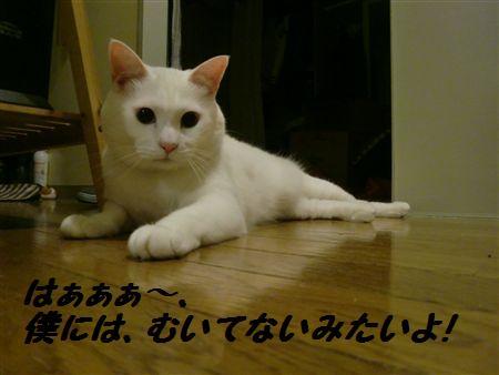 020_R.jpg